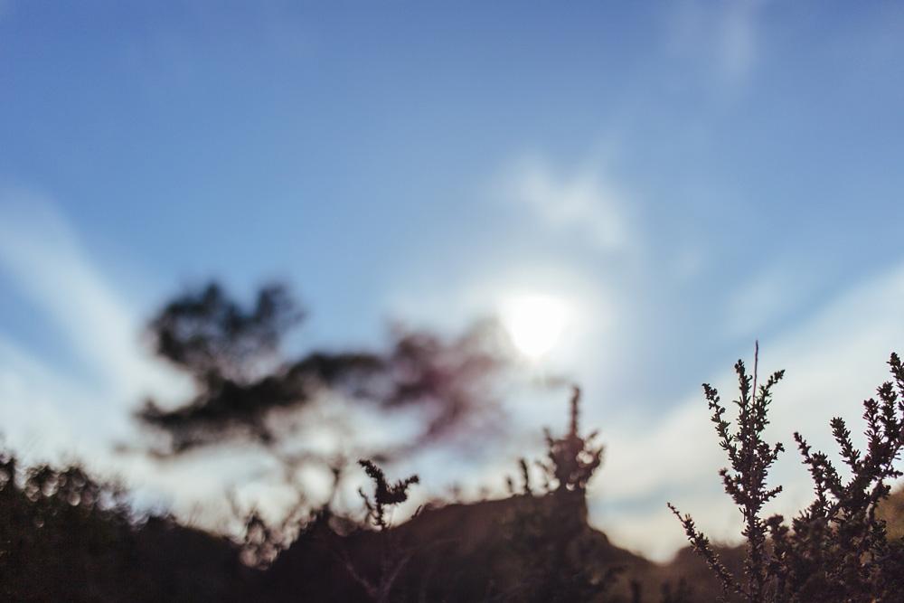 Torrey-Pines-State-Reserve-01