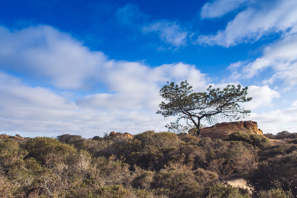 Torrey Pines State Reserve 01